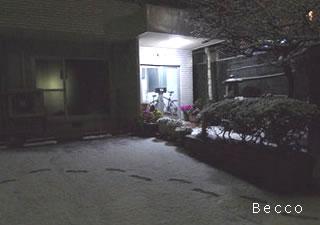 20100315-4.jpg