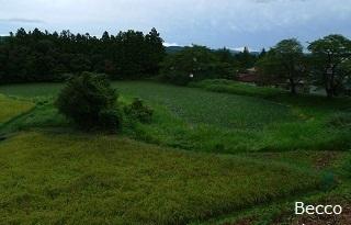 20100917-2.jpg